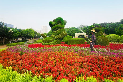 Side profile of a man watering flowers, Chen Clan Academy, Guangzhou, Guangdong Province, China : Stock Photo