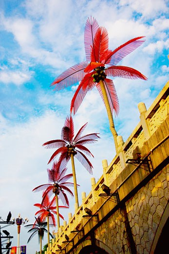 Low angle view of fan palm trees, Guilin, Guangxi Province, China : Stock Photo