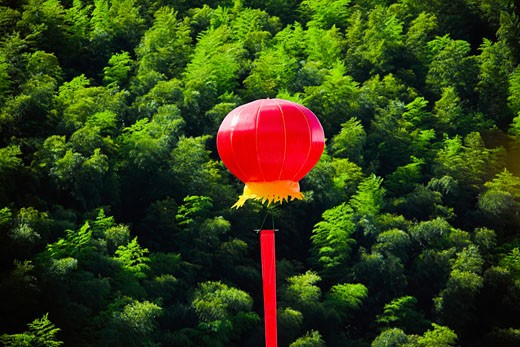 Chinese lantern over trees, Emerald Valley, Huangshan, Anhui Province, China : Stock Photo