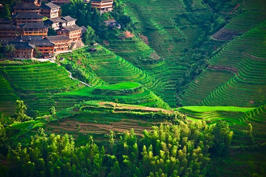 High angle view of terraced rice fields, Jinkeng Terraced Field, Guangxi Province, China : Stock Photo