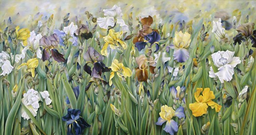 Stock Photo: 1770-100 The Irises of Guemappe