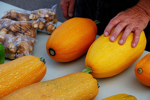 Stock Photo: 1772-116 Person's hand on a squash at a farmer's market, Wyoming, USA
