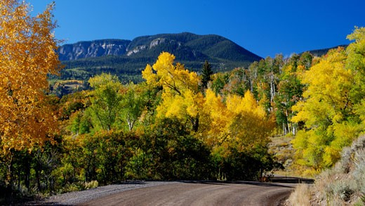Trees on a landscape with a mountain range in the background, Colorado, USA : Stock Photo