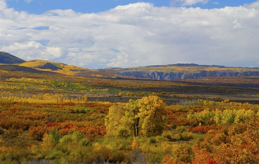 Stock Photo: 1772-262 Forest in autumn, Black Canyon Of The Gunnison National Park, Gunnison River, Colorado, USA