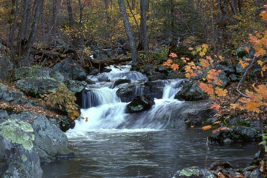 Creek flowing through a forest, Stoney Creek, Blue Ridge Mountains, Virginia, USA : Stock Photo