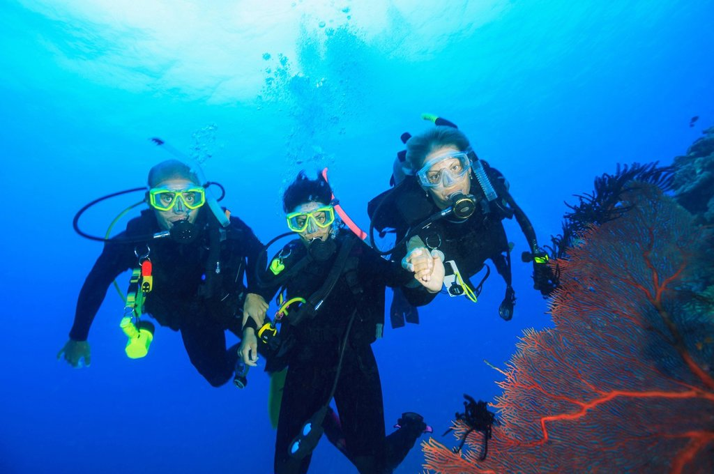 Stock Photo: 1773-187119 Divers swimming in coral reef