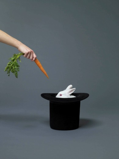 Hand holding carrot in front of rabbit : Stock Photo