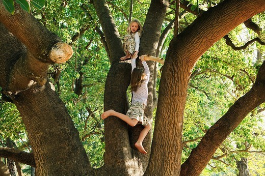 Girls playing in tree : Stock Photo