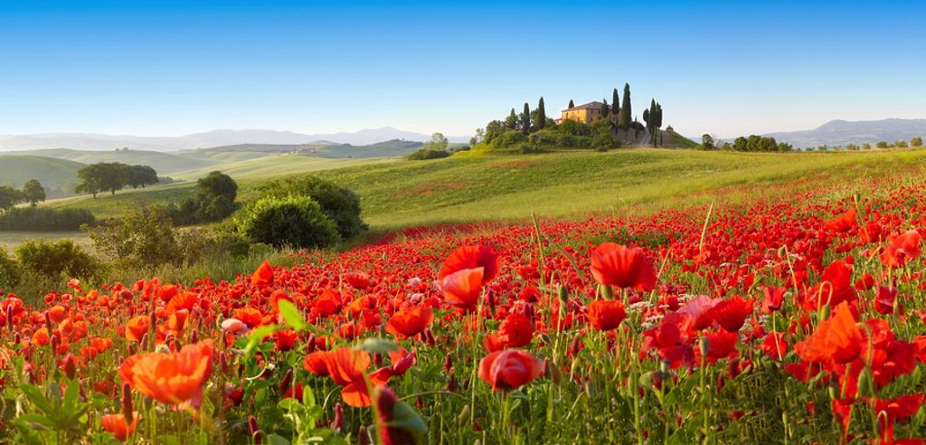 Orcia valley in spring : Stock Photo