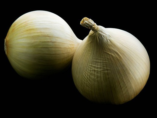 Two white onions set against black : Stock Photo