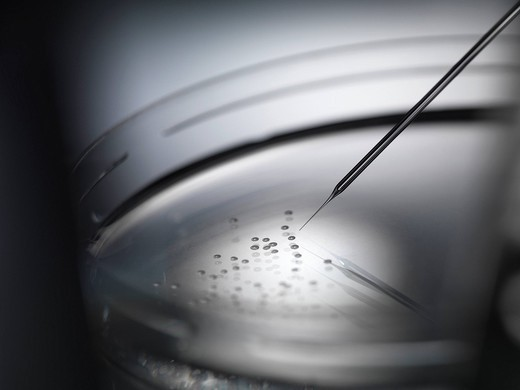 Micro pipette injecting stem cells used in therapeutic cloning for tissue replacement in petri dish : Stock Photo