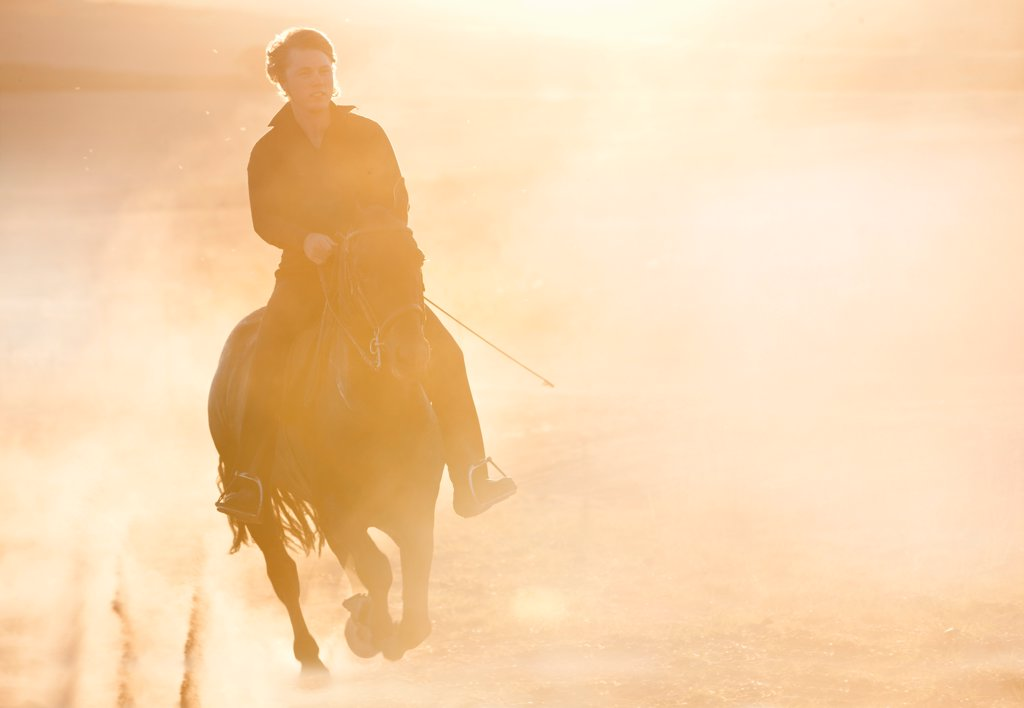 Silhouette of man riding horse in field : Stock Photo