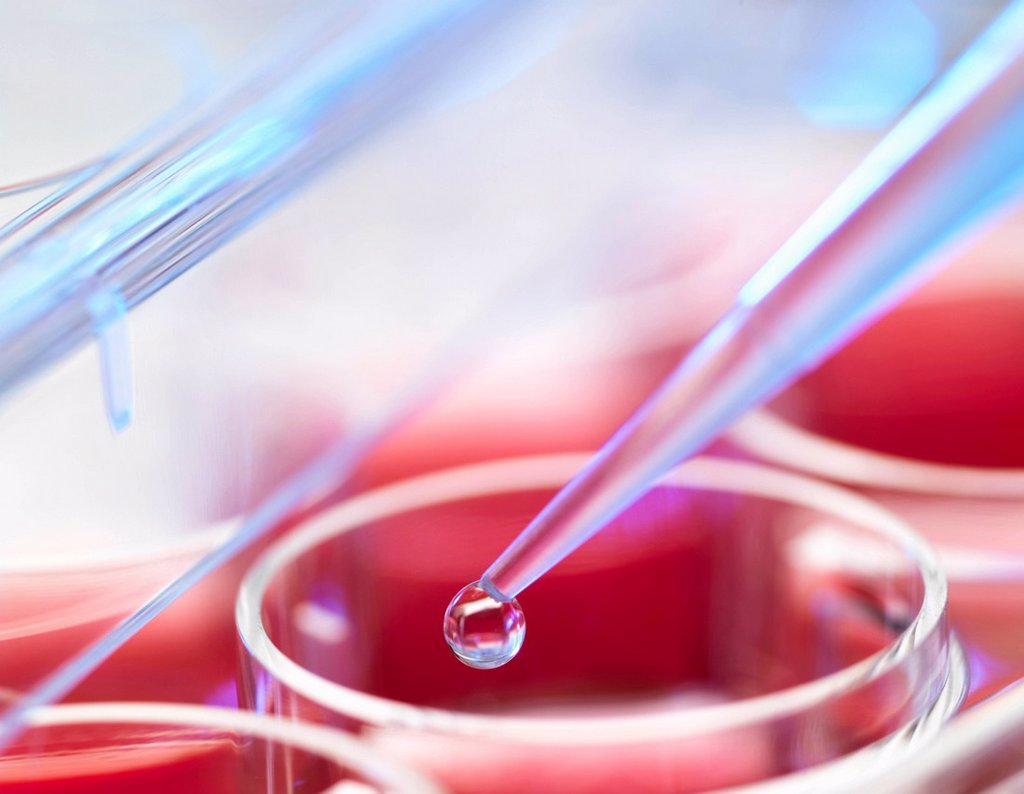 Stock Photo: 1773-99793 Embryonic stem cell research. Pipetting liquid into pots containing stem cell cultures used to repair or replace diseased tissues or organs. Cell cultures,embryonic stem cells,genome,dna, microbiology,stem cells,futuristic,pipetting,biotechnology,implant