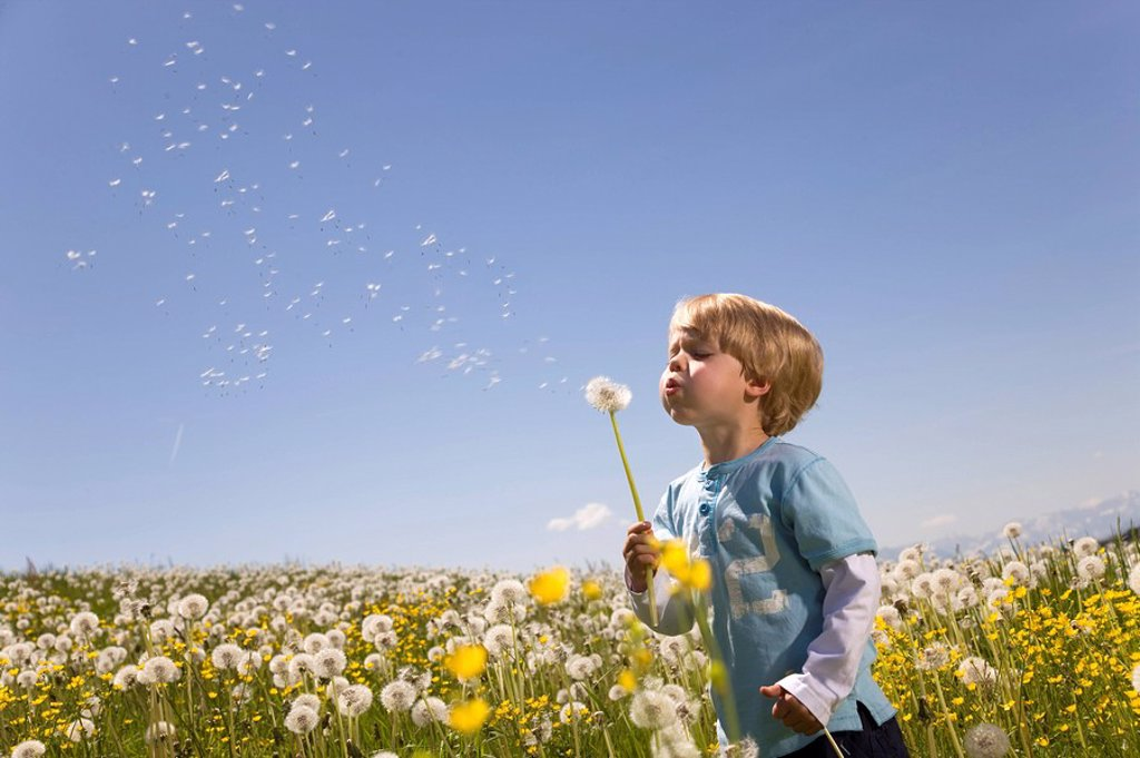 Stock Photo: 1773R-113466 boy blowing dandelion seeds