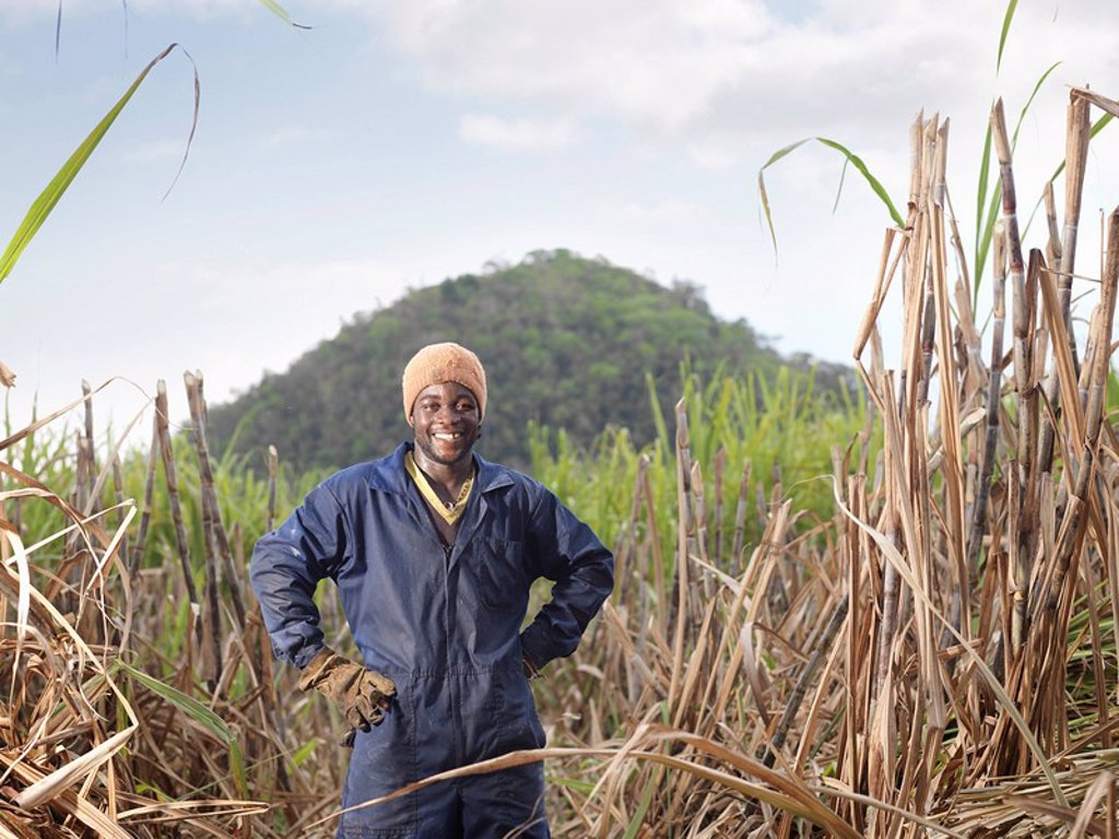 Stock Photo: 1773R-113892 Sugar Cane Worker In Field