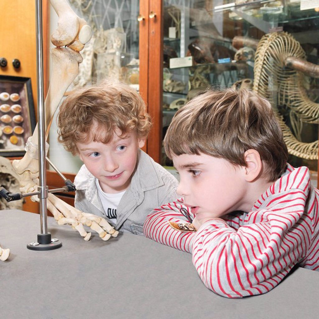 Boys looking at artifact in museum : Stock Photo