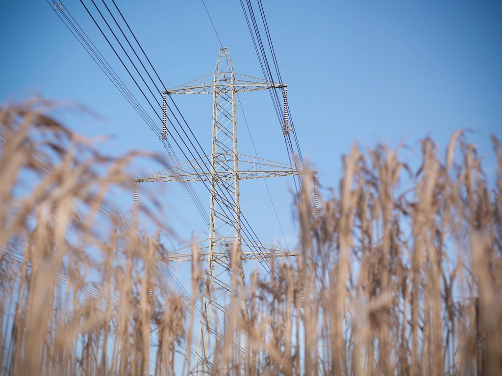Stock Photo: 1773R-162301 Power lines over field of elephant grass