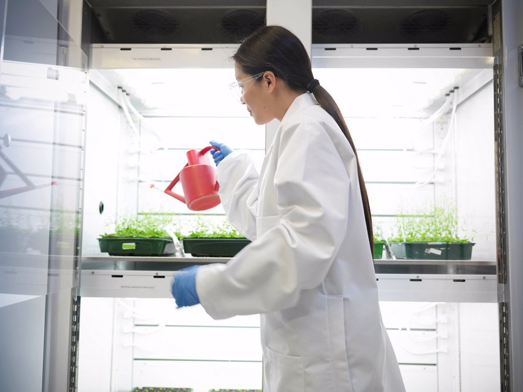 Scientist watering plants in container : Stock Photo
