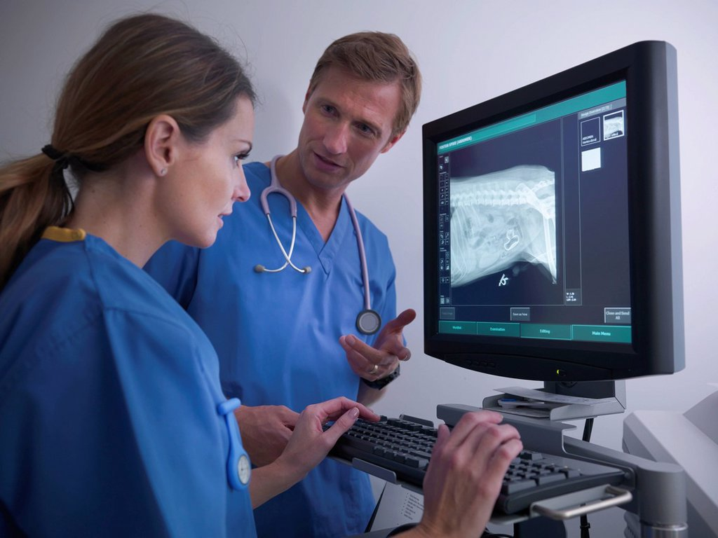 Veterinarians examining x_ray : Stock Photo