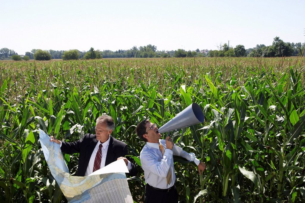 Businessmen in a cornfield with a map and megaphone : Stock Photo