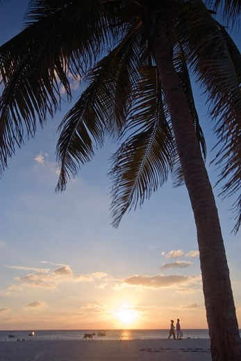 Stock Photo: 1774-299 Silhouette of a palm tree on the beach, Seven Mile Beach, Grand Cayman, Cayman Islands