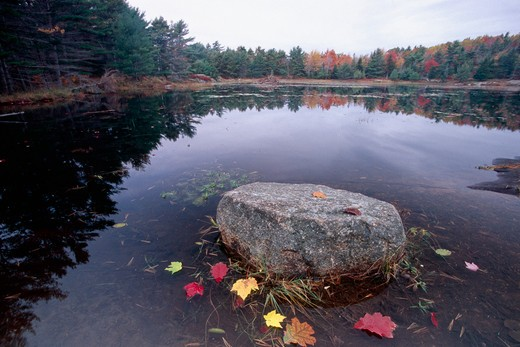 Stock Photo: 1774-320 Rock in a Pond, Acadia National Park, Mount Desert Island, Maine, USA