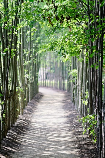 Stock Photo: 1774-555 USA, New Jersey, Walking path in woods