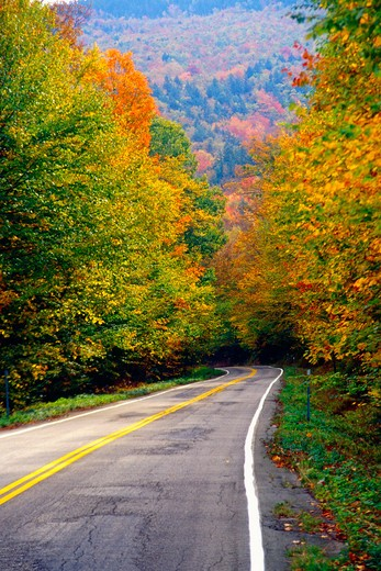 USA, New Hampshire, White Mountains, Road in autumn forest : Stock Photo