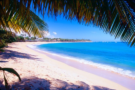Puerto Rico, Pinones, Beach View Under Palm Tree : Stock Photo