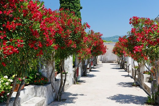 Stock Photo: 1774-830 Italy, Campania, Villa summer garden