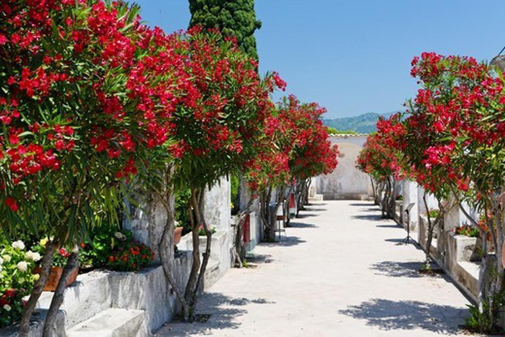 Italy, Campania, Villa summer garden : Stock Photo