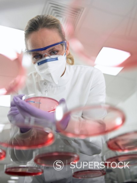 Stock Photo: 1775R-17226 Scientist using inoculating loop on petri dish