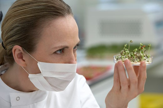 Scientist examining sprouts in petri dish : Stock Photo