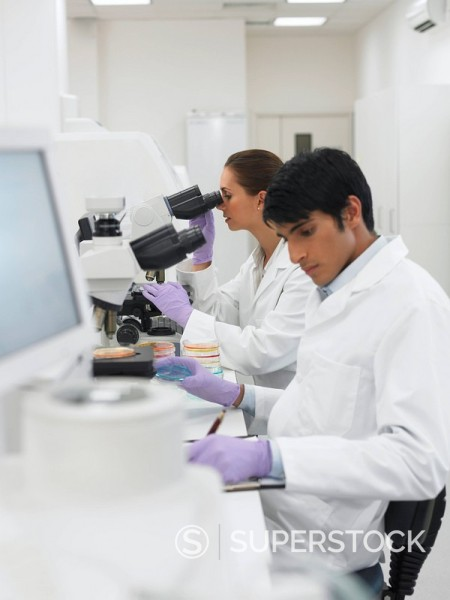 Stock Photo: 1775R-17278 Scientists working in laboratory