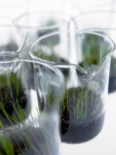 Stock Photo: 1775R-17335 Seedlings growing in beakers