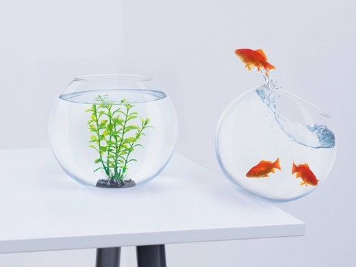 Goldfish in falling fishbowl jumping towards fishbowl with plant : Stock Photo