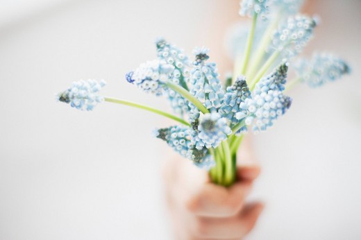 Hand holding bouquet of grape hyacinths : Stock Photo