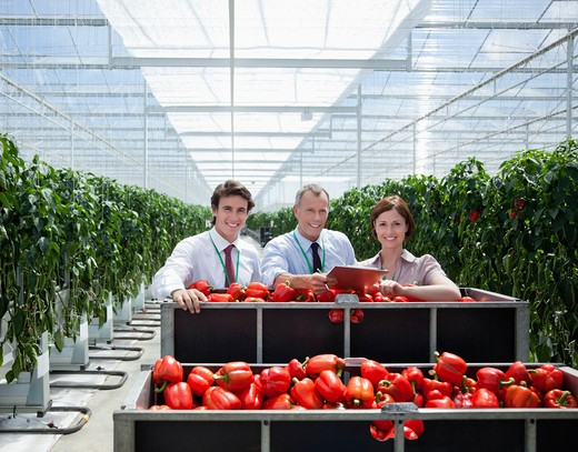Workers in greenhouse standing with produce : Stock Photo