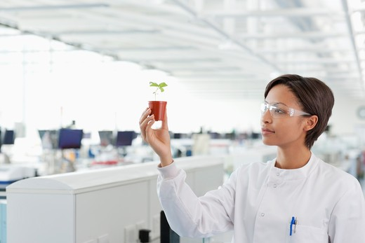 Scientist examining plant in lab : Stock Photo