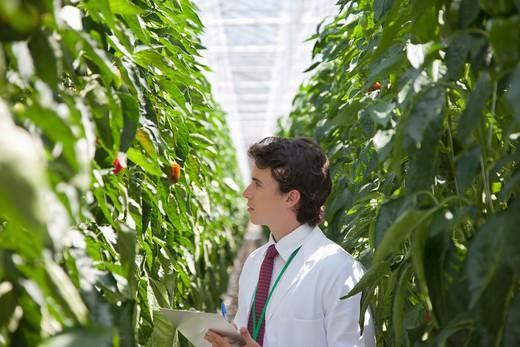 Scientist examining plants in greenhouse : Stock Photo