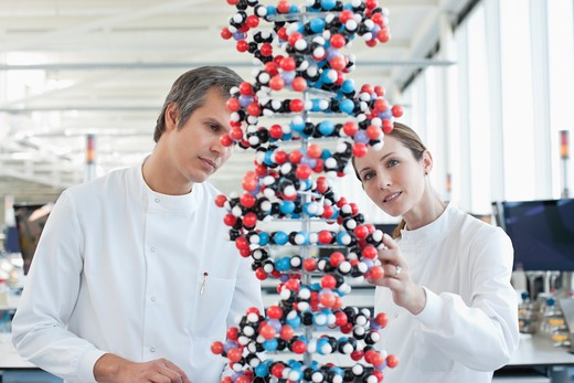 Stock Photo: 1775R-25968 Scientists examining molecular model in lab