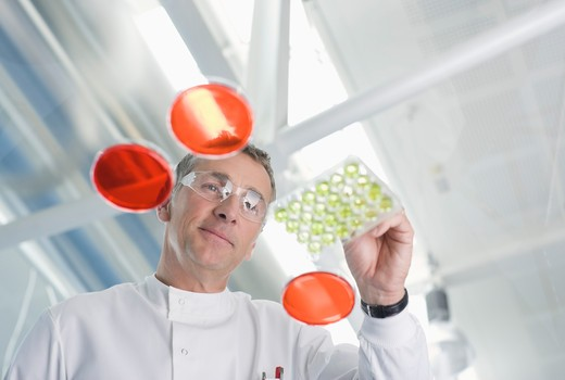 Scientist examining petri dishes in lab : Stock Photo