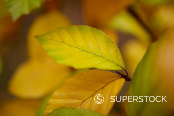 Stock Photo: 1775R-28335 Close up of green leaves