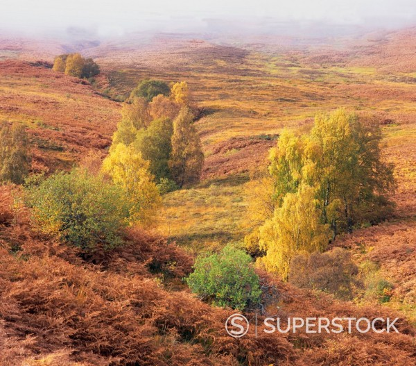 Stock Photo: 1775R-28506 Trees growing in grassy rural landscape