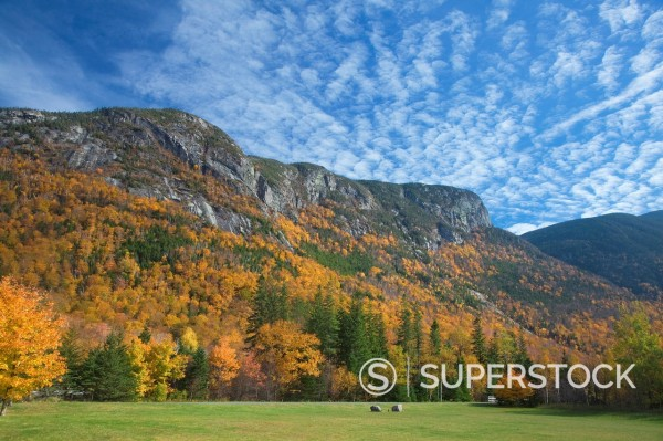 Autumn leaves on trees along mountain : Stock Photo