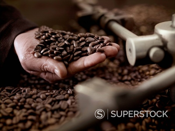 Stock Photo: 1775R-30697 Hand holding coffee beans over roasting machine