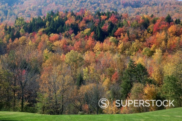 View of autumn leaves on trees in forest : Stock Photo