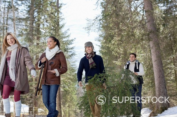 Friends carrying fresh cut Christmas tree in woods : Stock Photo