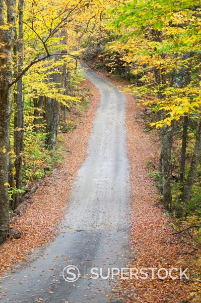 Stock Photo: 1775R-31223 Lane through autumn woods
