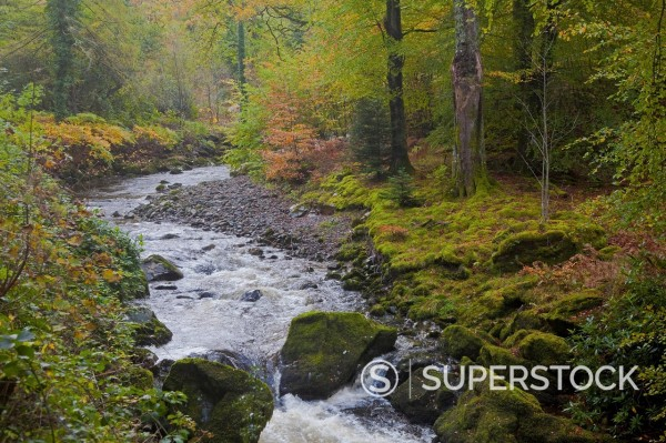 Stock Photo: 1775R-31224 River in autumn woods
